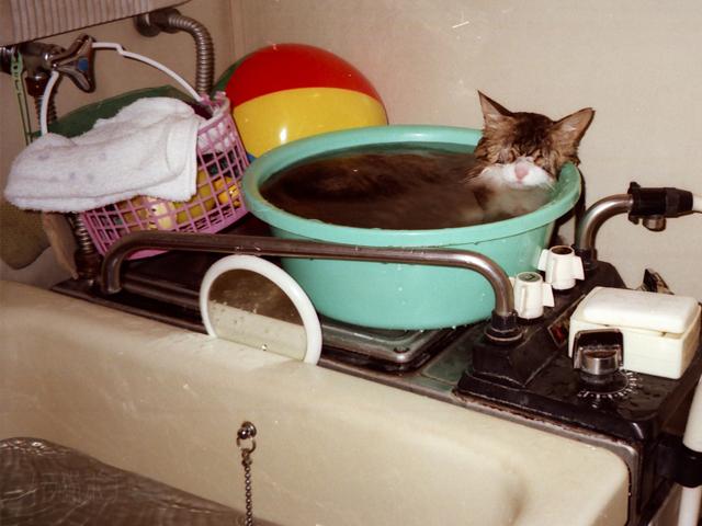 いい湯だにゃん.jpg