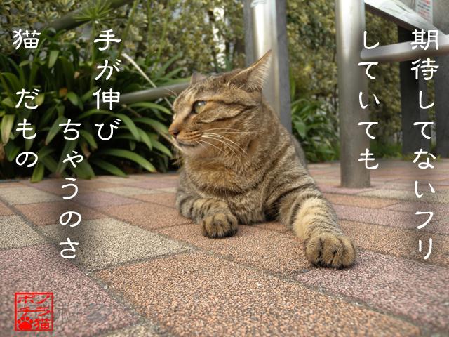 ぽーかーふぇいすで待ってるにゃん.jpg