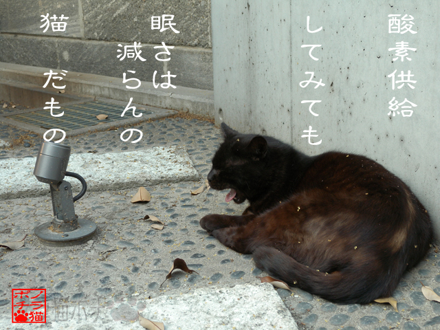 不眠と無縁な猫なのにゃん.jpg