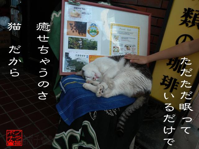 何をしてても猫なのにゃん.jpg