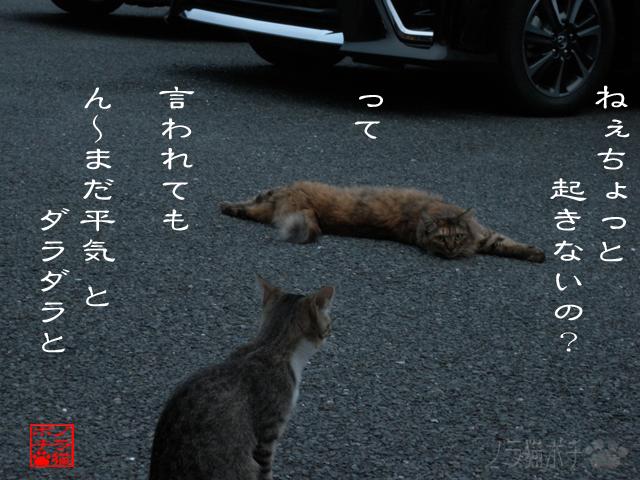 危機感ナニソレ美味いのにゃん.jpg
