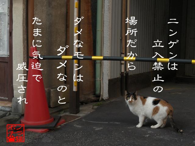 猫じゃないならダメなのにゃん.jpg