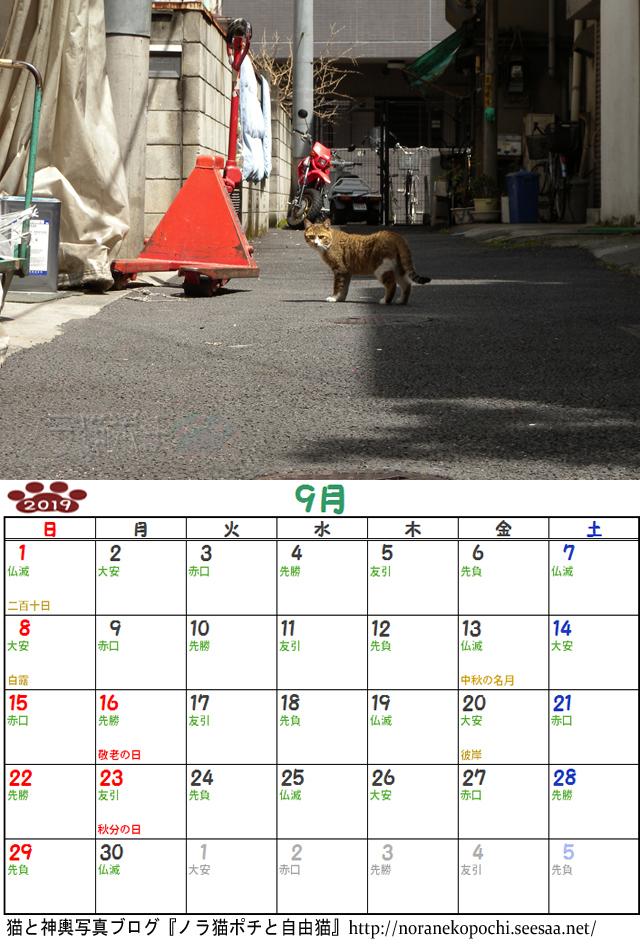 猫の居た路地9月.jpg