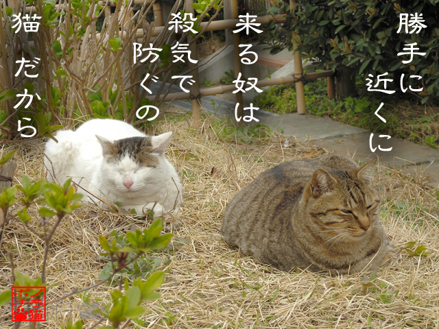 猫の背かいも厳しいにゃん.jpg
