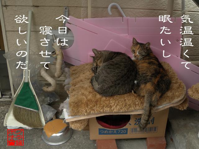 猫は寝る子と書くんだにゃん.jpg
