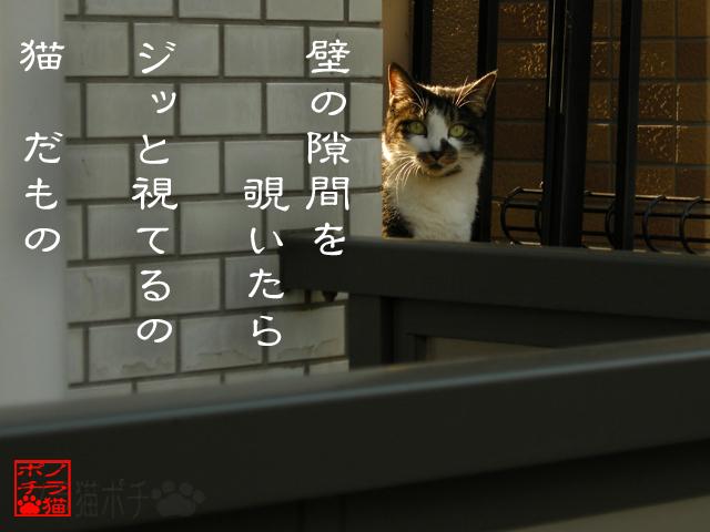 猫は深淵なのかもにゃん.jpg