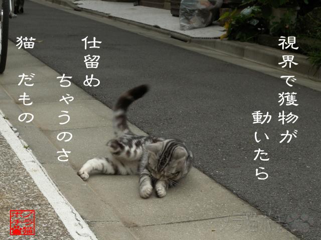 猫は肉食獣なのにゃん.jpg