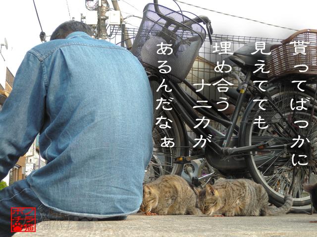 猫背どうしの時間だにゃん.jpg