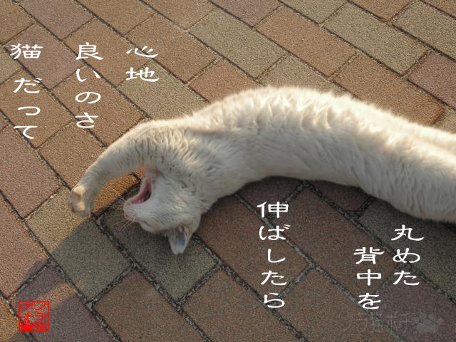 猫背ばっかじゃ固まるにゃん.jpg