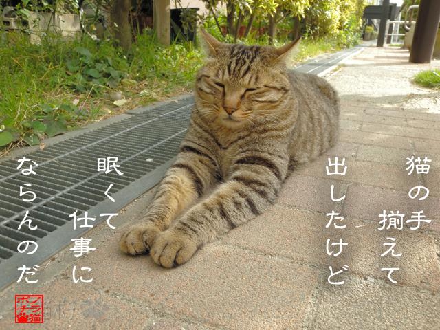 眠いと動けぬ猫なのにゃん.jpg