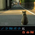 自由猫1.jpg