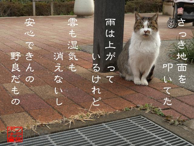 警戒スイッチONなのにゃん.jpg